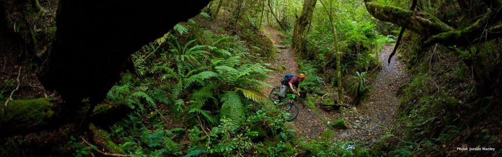 Mountain Biking in Rotoua New Zealand. Jordan Manley Photo